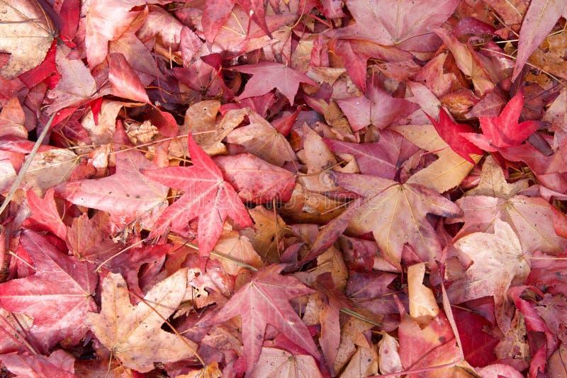 Fermez-vous des feuilles d'automne humides photos stock
