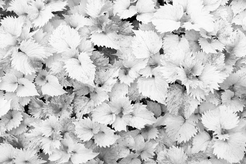 Fermez-vous des feuilles jaunes comme fond, dos et photo blanche image libre de droits