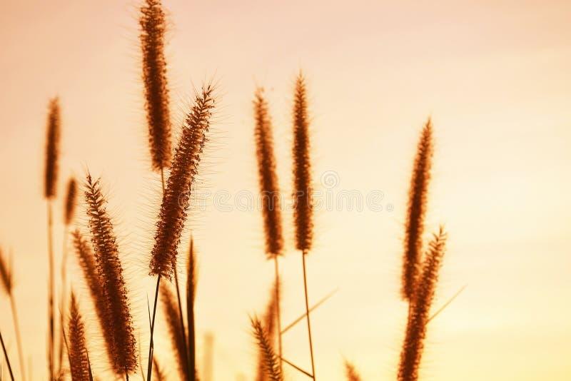Fermez-vous des fleurs d'herbe images stock