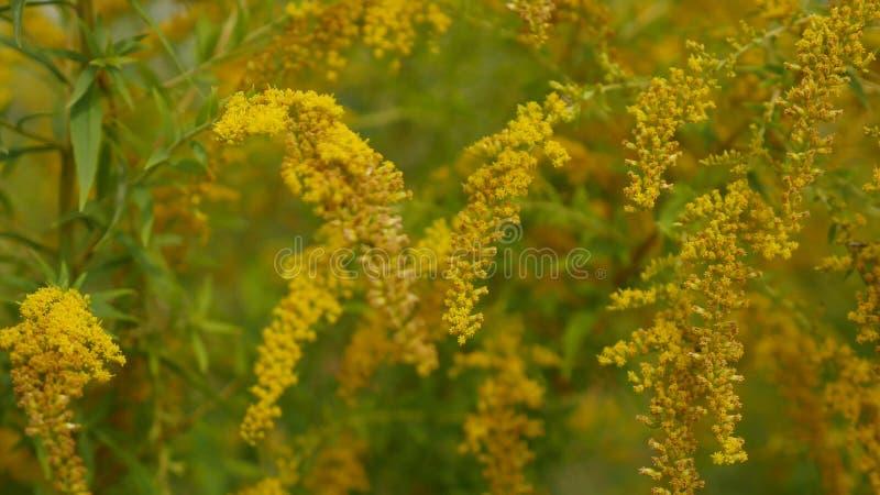 Fermez-vous des fleurs de champ d'herbe à la lumière de coucher du soleil nature colorée de fond photos libres de droits