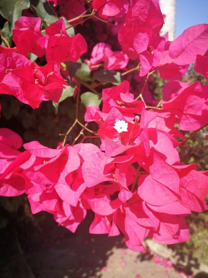 Fermez-vous des fleurs espagnoles images libres de droits