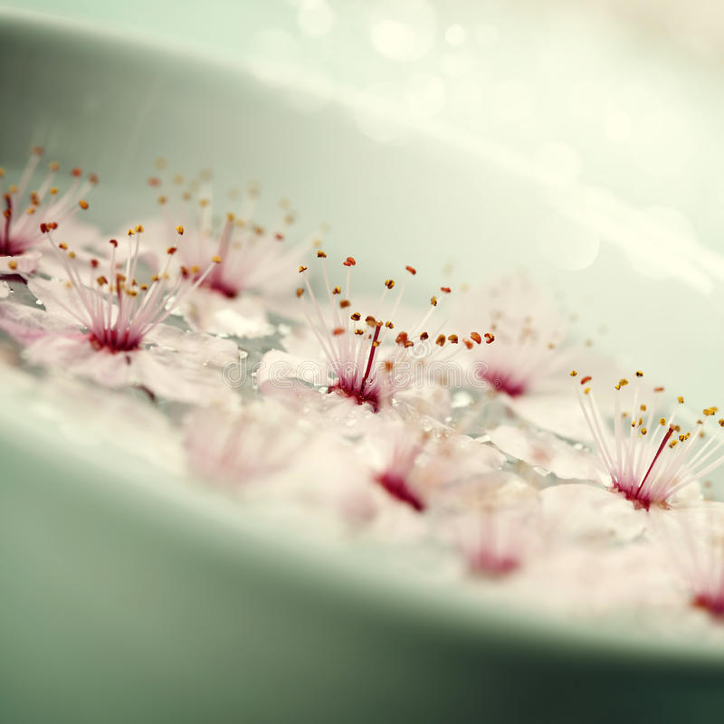 Fermez-vous des fleurs flottant dans la cuvette de l'eau photo stock