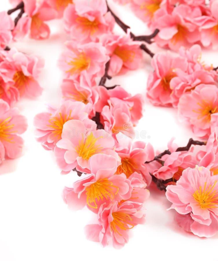 Fermez-vous des fleurs roses. photos stock