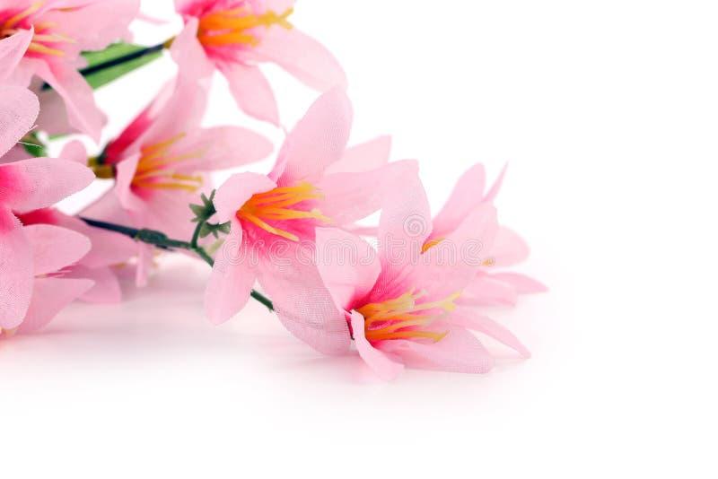 Fermez-vous des fleurs roses. image libre de droits