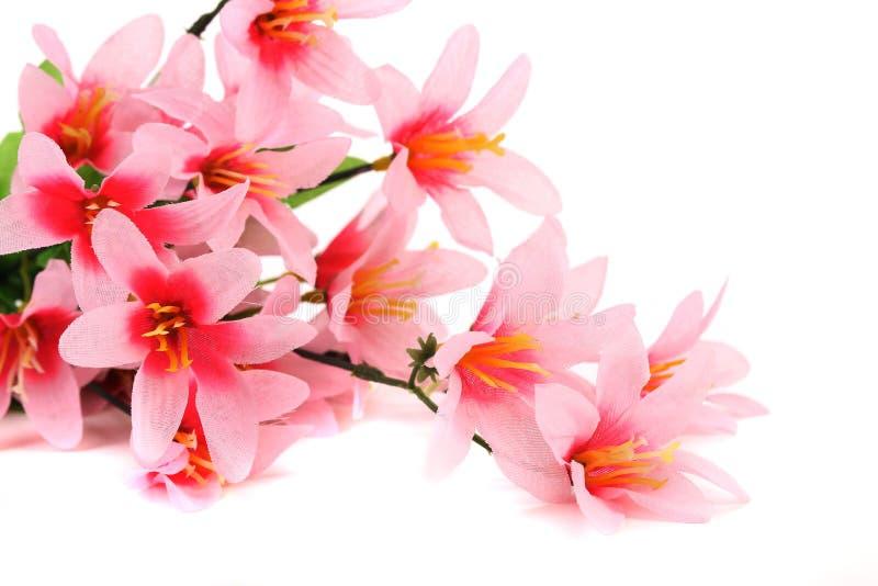 Fermez-vous des fleurs roses. photographie stock libre de droits