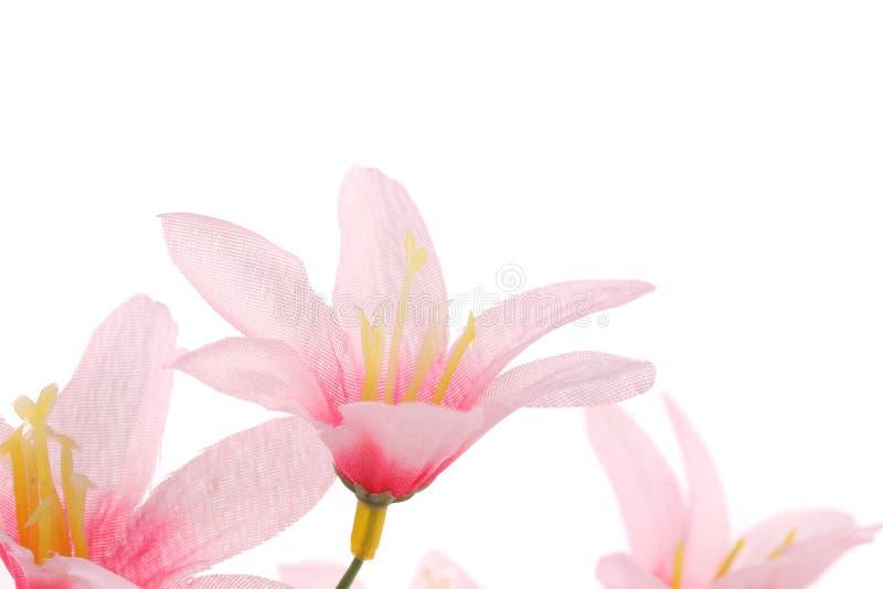 Fermez-vous des fleurs roses. images libres de droits