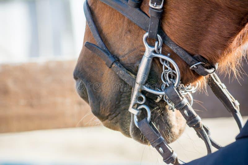 Fermez-vous des freins de cheval photographie stock libre de droits