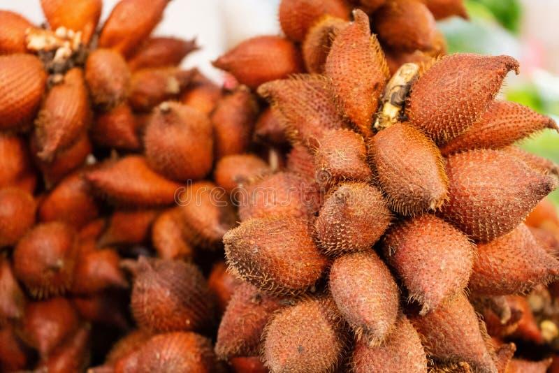 Fermez-vous des fruits de Salacca que le wallichiana de Salacca ont beaucoup de fibre, vitamines, soins de santé image stock