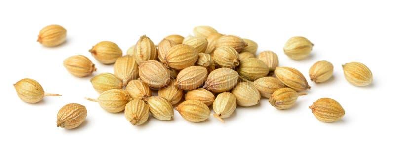 Fermez-vous des graines de coriandre sèches d'isolement sur le blanc photos libres de droits