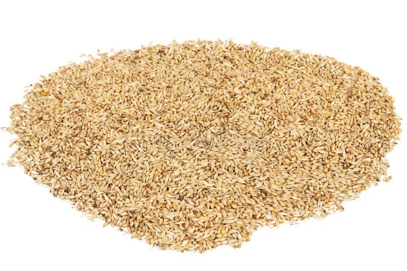 Fermez-vous des grains de blé photo libre de droits
