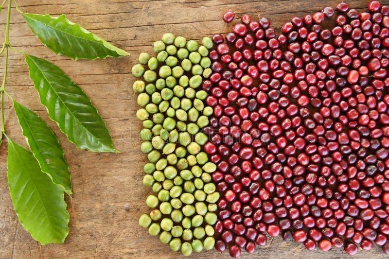 Fermez-vous des grains de café frais image stock