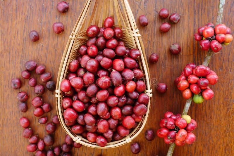 Fermez-vous des grains de café frais photo stock