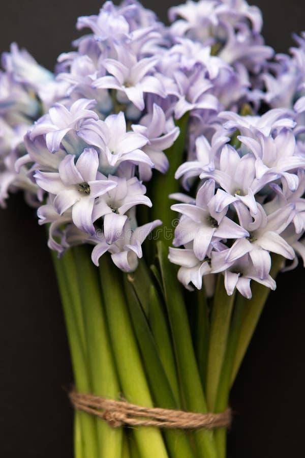 Fermez-vous des jacinthes bleues de fleurs de ressort sur un fond foncé image stock