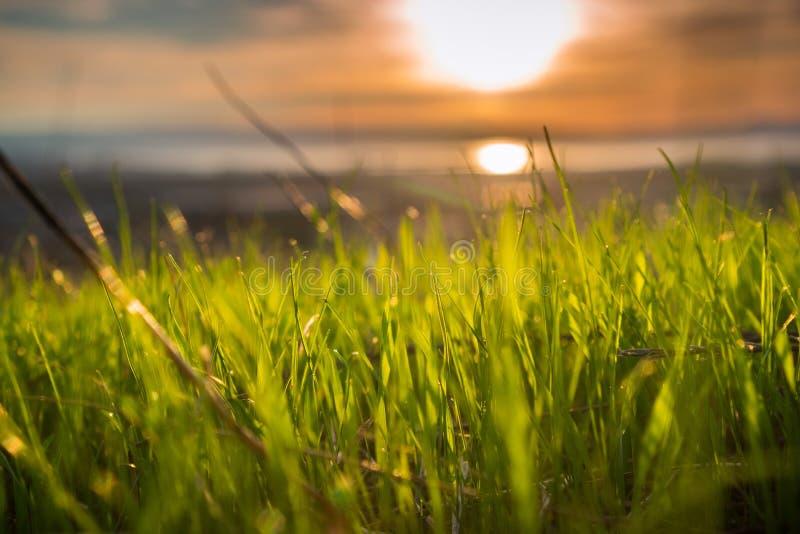 Fermez-vous des lames de l'herbe nouvellement poussées images stock