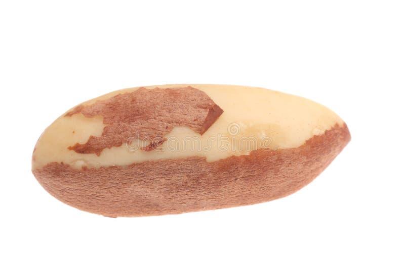 Fermez-vous des noix du brésil. images stock
