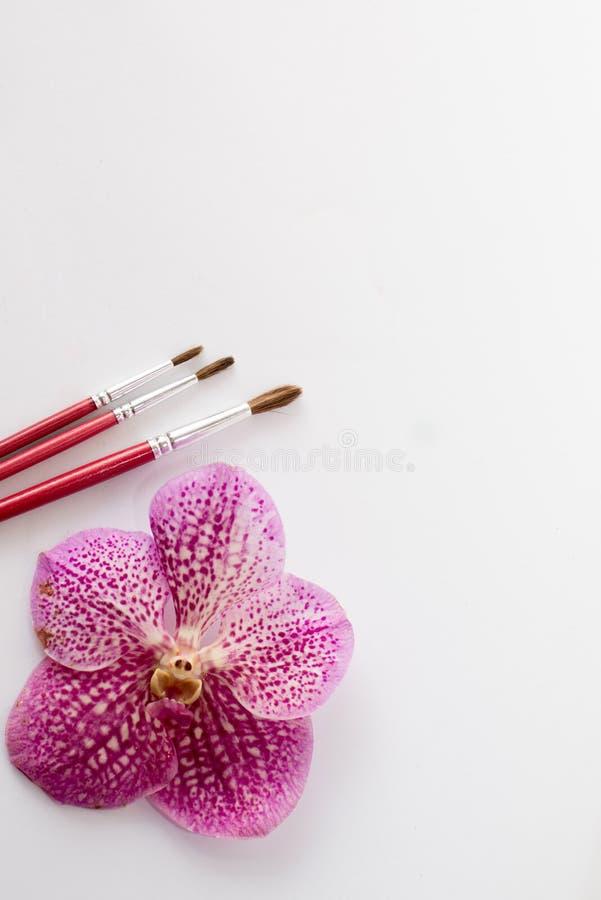 Fermez-vous des pinceaux rouges avec la fleur rose d'isolement sur le fond blanc table pour la peinture texte images stock