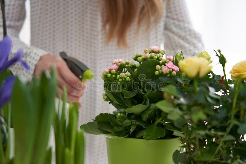 Fermez-vous des plantes d'intérieur de arrosage de femme avec le jet images libres de droits