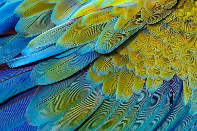 Fermez-vous des plumes d'oiseau d'ara de Catalina photos libres de droits