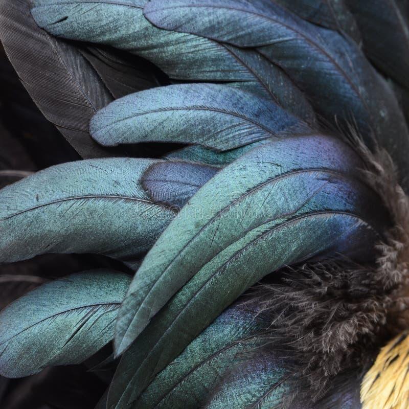 Fermez-vous des plumes d'un coq photo libre de droits
