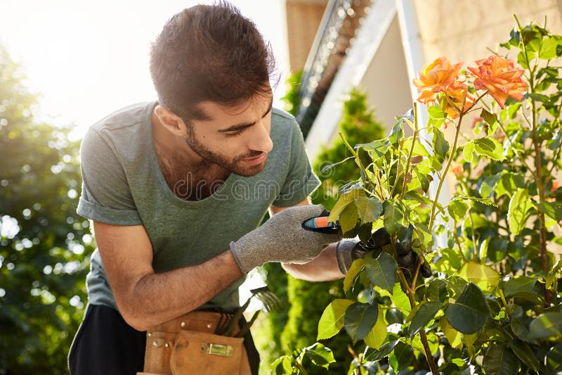 Fermez-vous du beau fleuriste barbu dans le T-shirt bleu avec des outils de jardin coupant les fleurs mortes, en passant le matin image stock