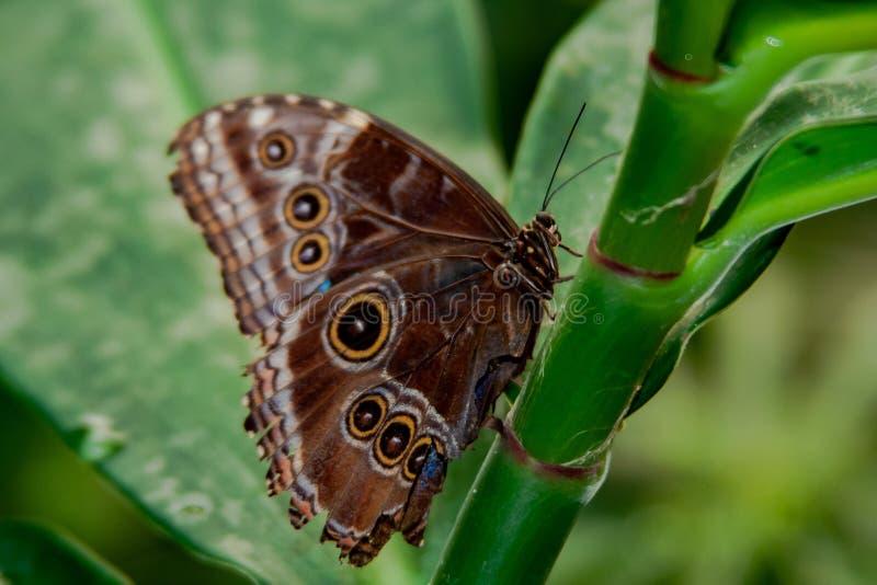 Fermez-vous du beau papillon au-dessus d'une usine photographie stock