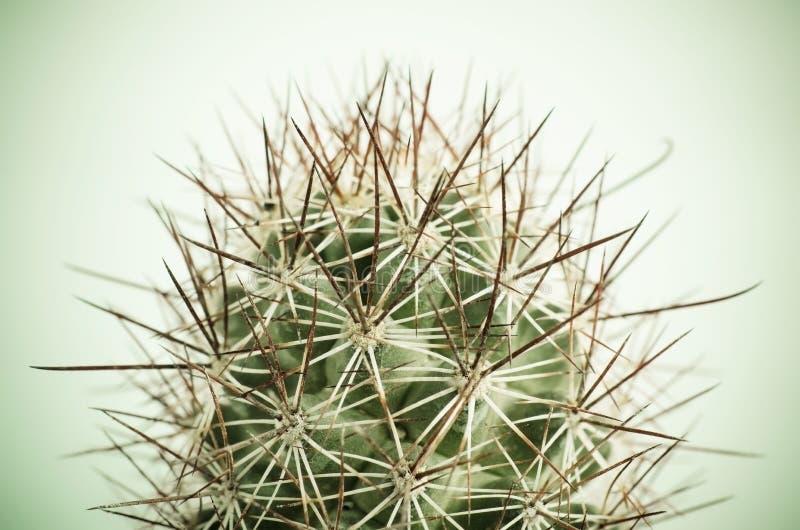 Fermez-vous du cactus photographie stock libre de droits