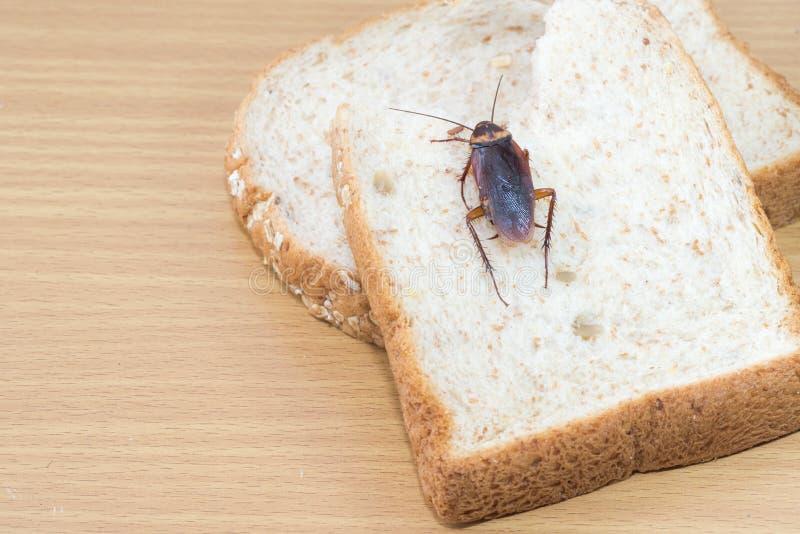 Fermez-vous du cancrelat sur un pain de bl? entier image stock