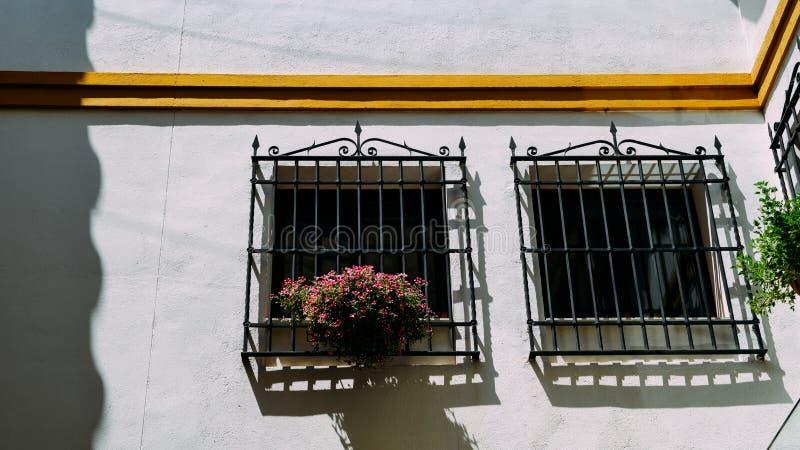 Fermez-vous du châssis de fenêtre blanc de bâtiment de chaux avec les fleurs colorées à Cordoue, Espagne photographie stock libre de droits
