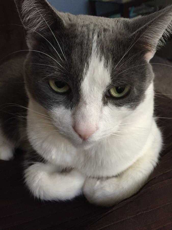 Fermez-vous du chat avec des pattes rempliées photos libres de droits