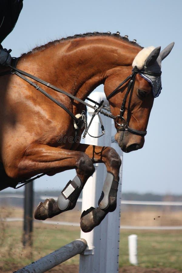 Fermez-vous du cheval sautant d'exposition photos stock