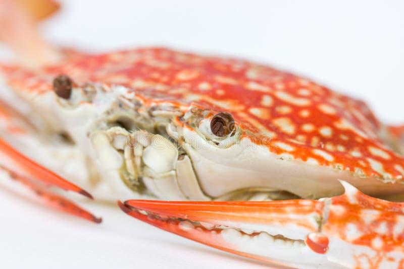 Fermez-vous du crabe bleu. photographie stock libre de droits