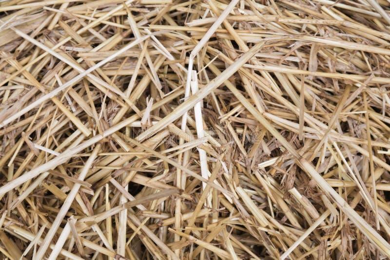 Fermez-vous du fond de texture de paille d'herbe sèche image stock