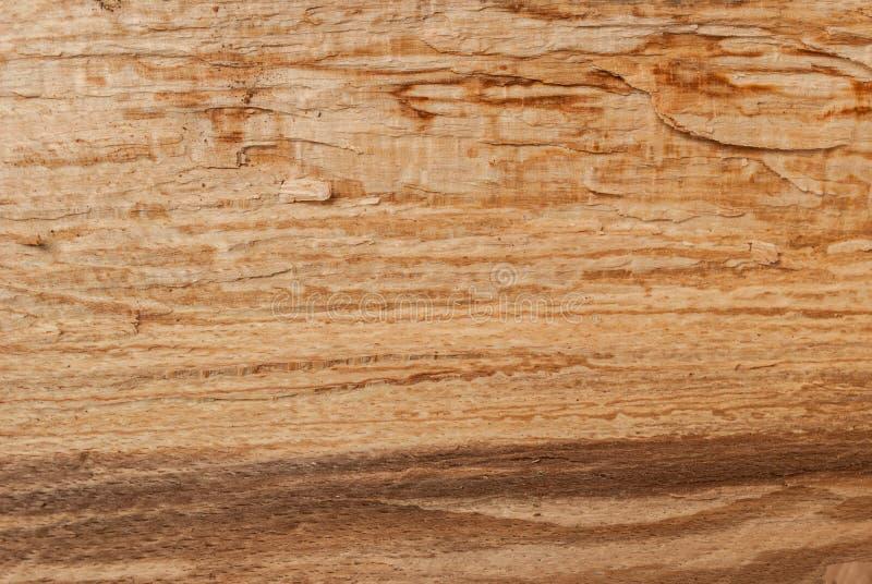 Fermez-vous du fond en bois de texture Arbre de hêtre images libres de droits