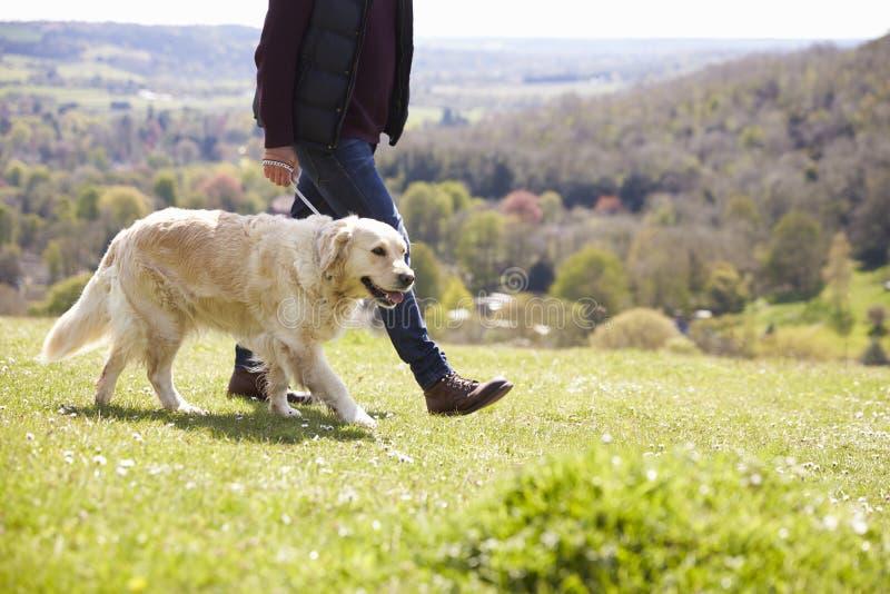 Fermez-vous du golden retriever sur la promenade dans la campagne photo stock