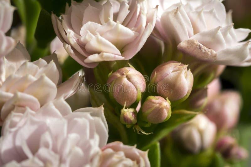 Fermez-vous du groupe rose de fleurs photos stock