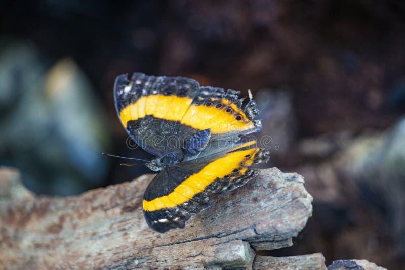 Fermez-vous du papillon sur une feuille images stock