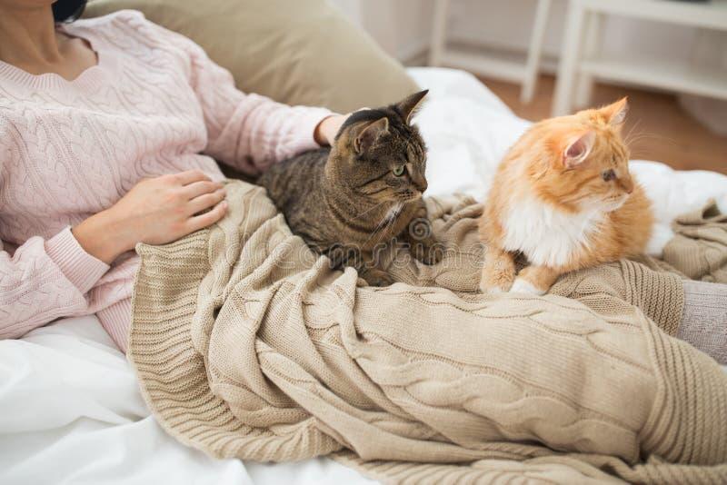 Fermez-vous du propriétaire avec le chat rouge et tigré dans le lit image libre de droits