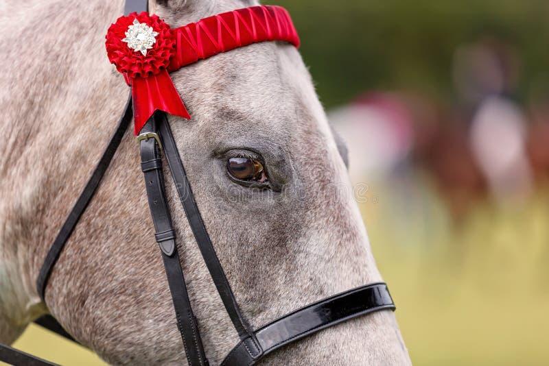 Fermez-vous du visage d'un cheval d'exposition photo libre de droits