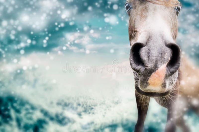 Fermez-vous du visage drôle de cheval au fond de nature d'hiver avec la neige image stock