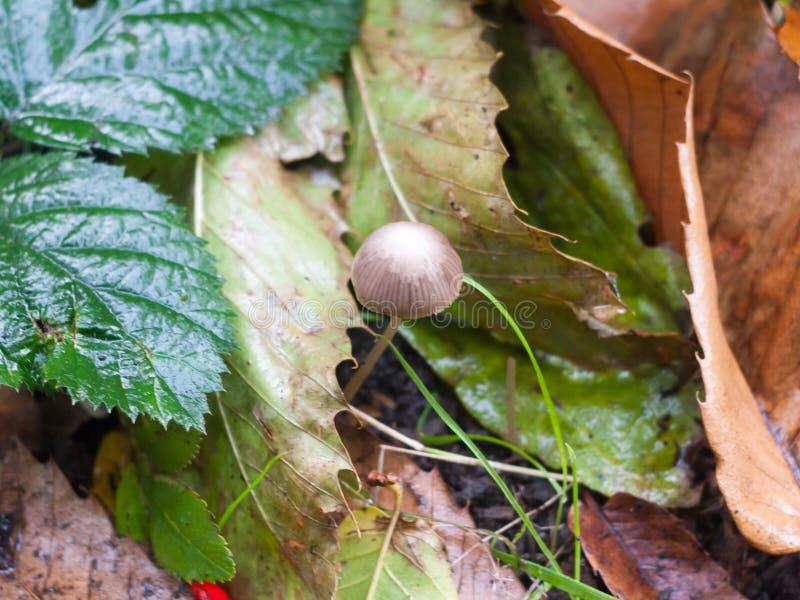 Fermez-vous petit du plancher brun et blanc simple de forêt de champignon photo libre de droits