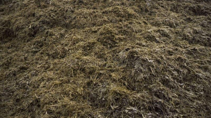 Fermez-vous pour la pile de la vieille herbe et de l'humus préparés pour la fertilisation de sol, concept d'agriculture longueur  image stock
