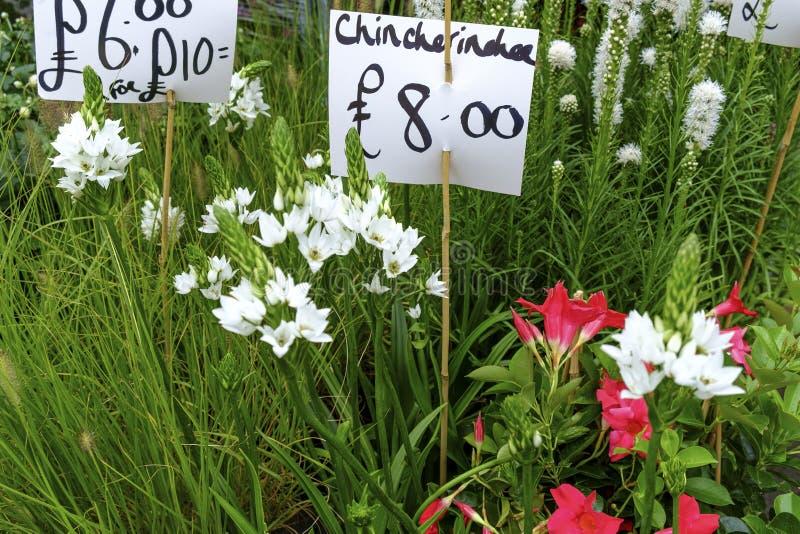Download Fermez-vous Sur De Diverses Jeunes Plantes De Fleur à Vendre Image stock - Image du verdure, fleur: 76077867