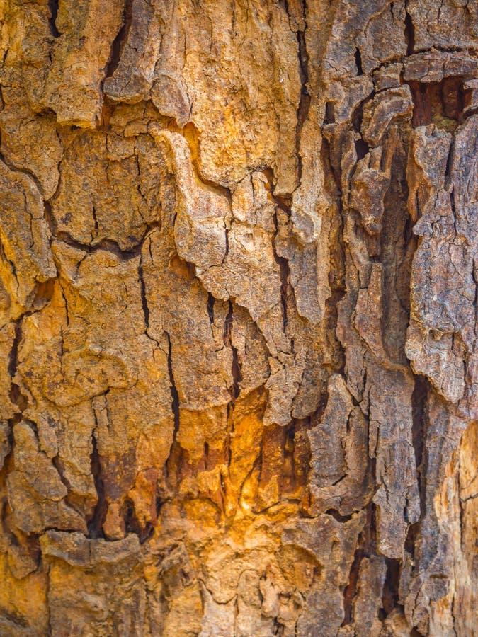 Fermez-vous sur l'écorce du fond d'arbre et donnez une consistance rugueuse images stock