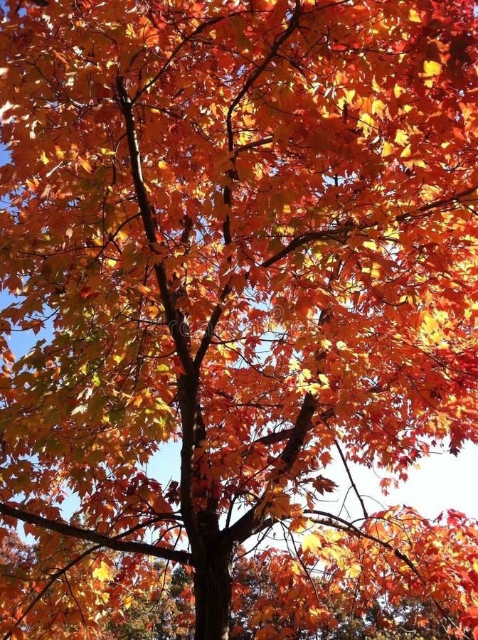 Fermez-vous sur l'arbre en automne image stock