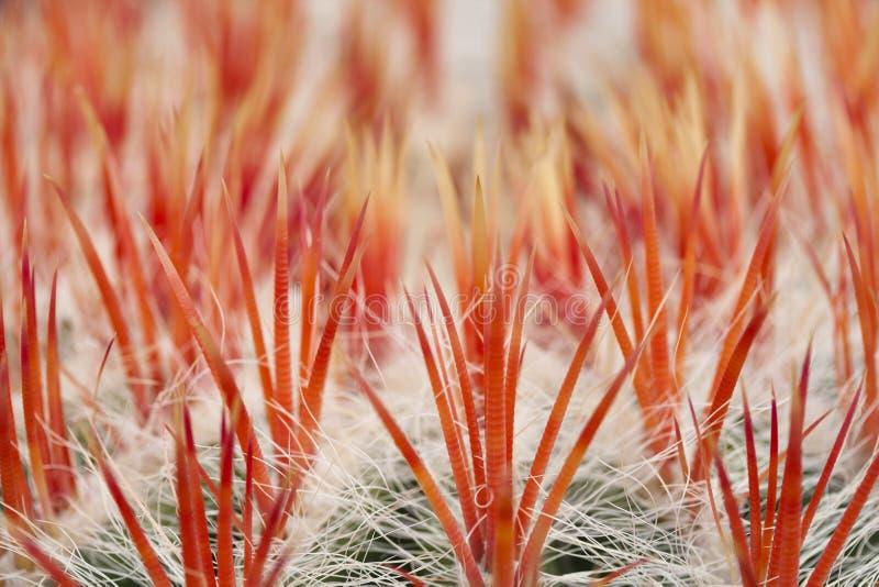Fermez-vous vers le haut d'un cactus photo stock