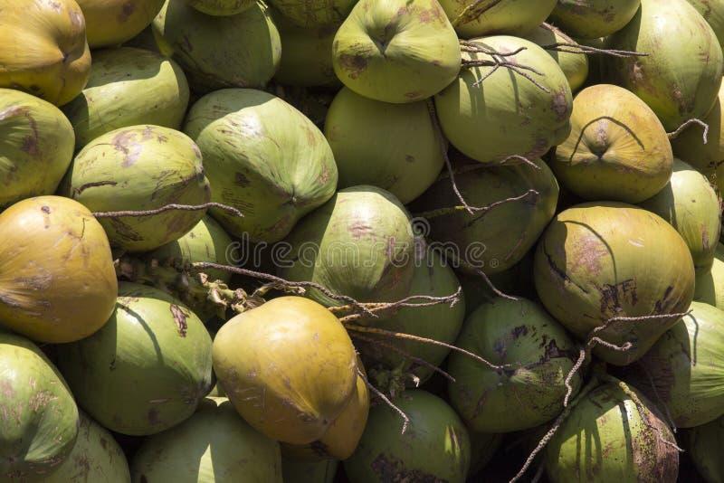 Fermez-vous vers le haut d'un groupe de fruit vert de noix de coco photo stock