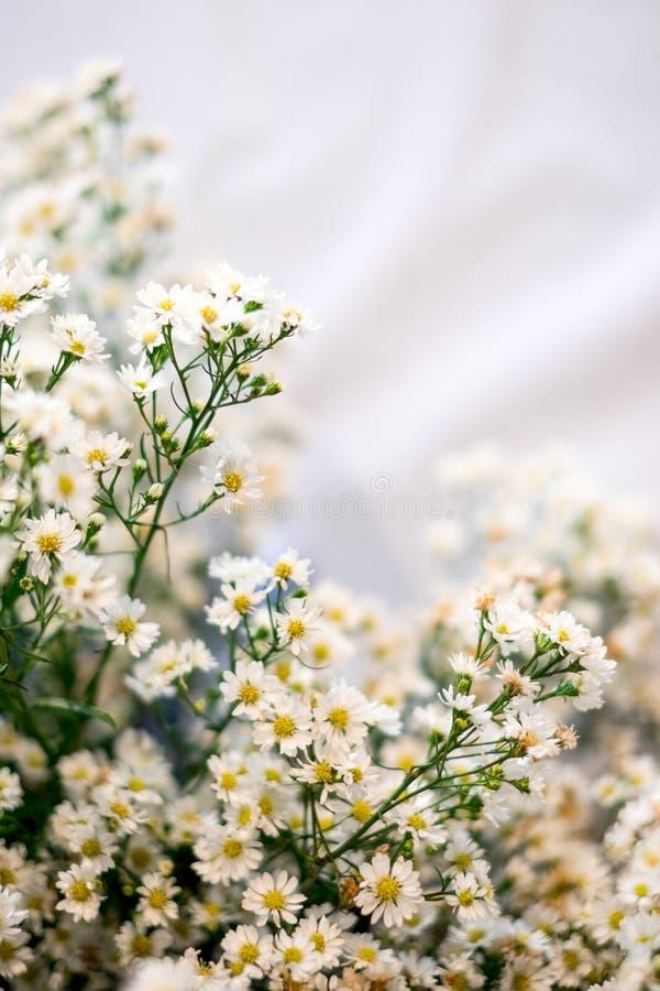 Fermez-vous vers le haut d'une petits fleur blanche et sélectif focalisés photo libre de droits