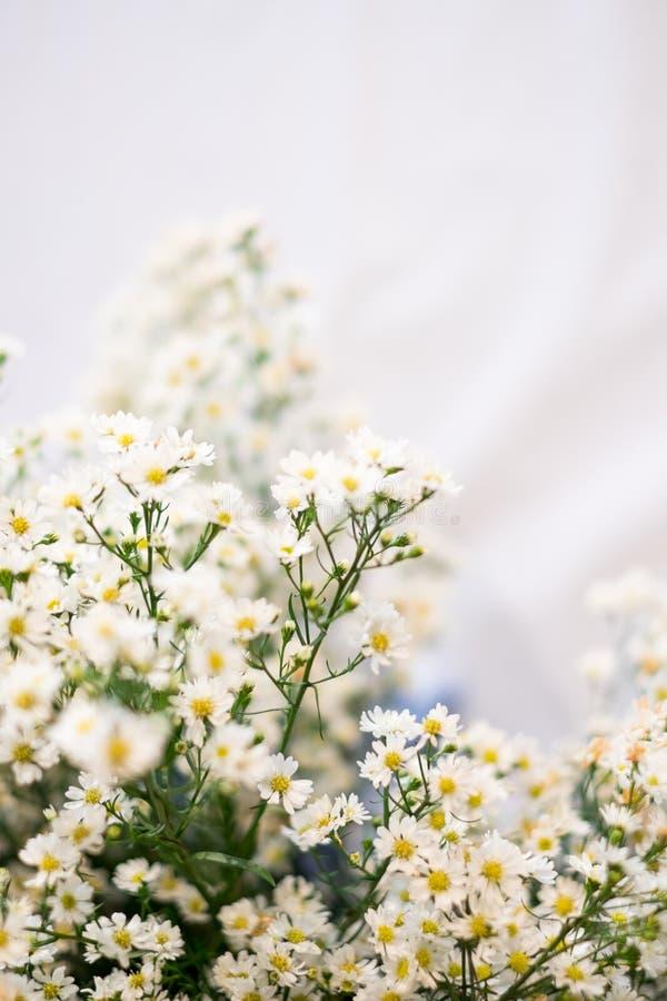 Fermez-vous vers le haut d'une petits fleur blanche et sélectif focalisés image stock