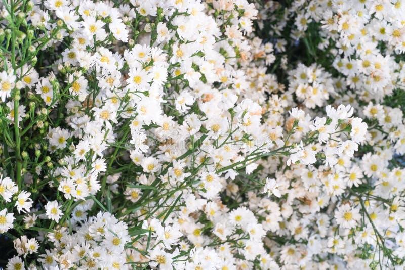 Fermez-vous vers le haut d'une petits fleur blanche et sélectif focalisés photographie stock