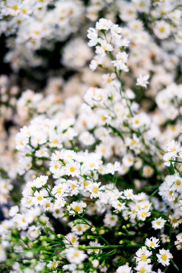 Fermez-vous vers le haut d'une petits fleur blanche et sélectif focalisés images libres de droits